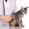 Ветеринарные клиники в Надыме